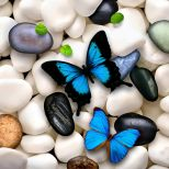 Butterflies On Stones Desktop Background